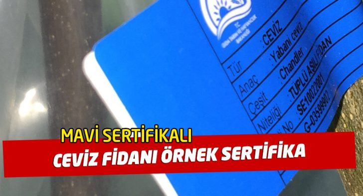 mavi sertifikalı ceviz fidanı